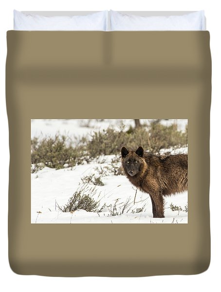 Duvet Cover featuring the photograph W12 by Joshua Able's Wildlife