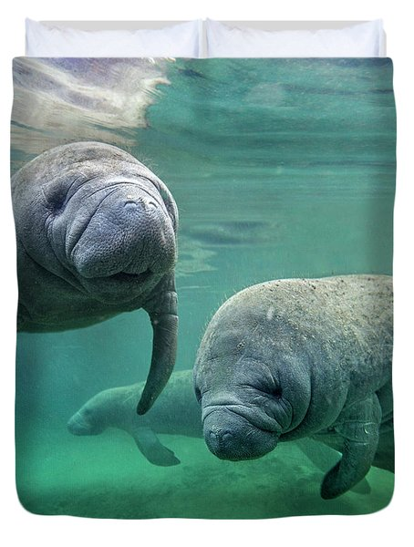 West Indian Manatee, North America Duvet Cover