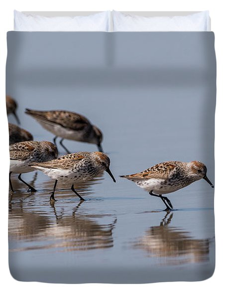 Western Sandpipers And Reflection Duvet Cover