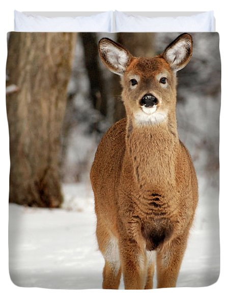 Whitetail In Snow Duvet Cover