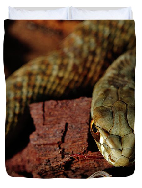 Wild Snake Malpolon Monspessulanus In A Tree Trunk Duvet Cover