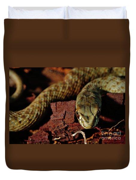 Wild Snake Malpolon Monspessulanus In A Tree Trunk Duvet Cover