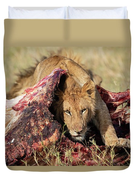 Young Lion On Cape Buffalo Kill Duvet Cover