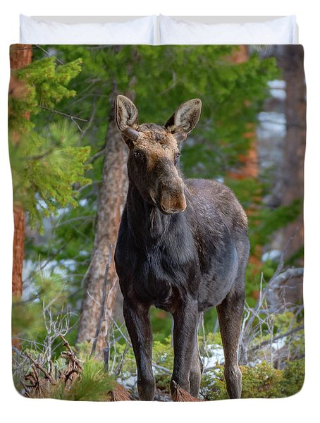 Young Moose In The Morning Forest Duvet Cover