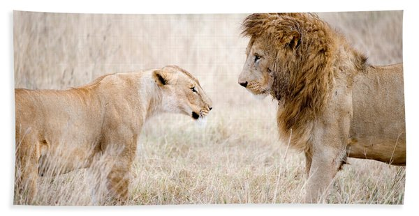 Lion And A Lioness Panthera Leo Hand Towel