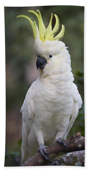 Sulphur-crested Cockatoo Displaying Bath Towel