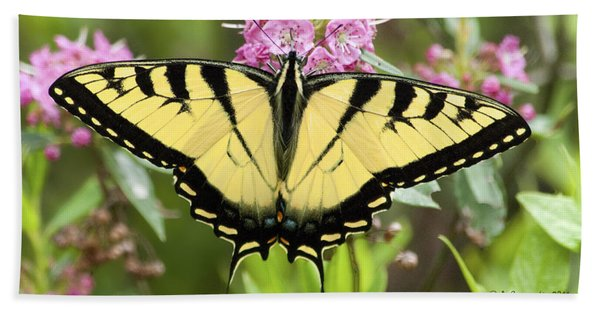Tiger Swallowtail Butterfly On Milkweed Flowers Hand Towel