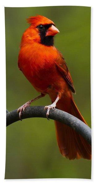 Male Cardinal Hand Towel