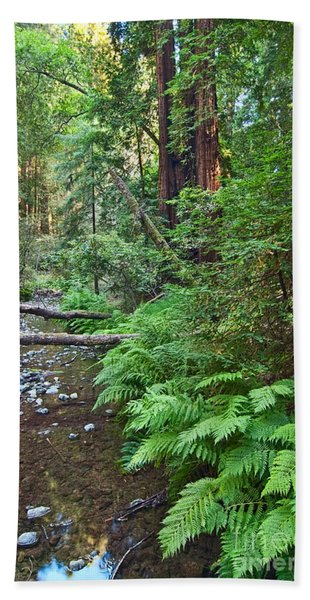 Redwood Forest Of Muir Woods National Monument In San Francisco. Bath Towel