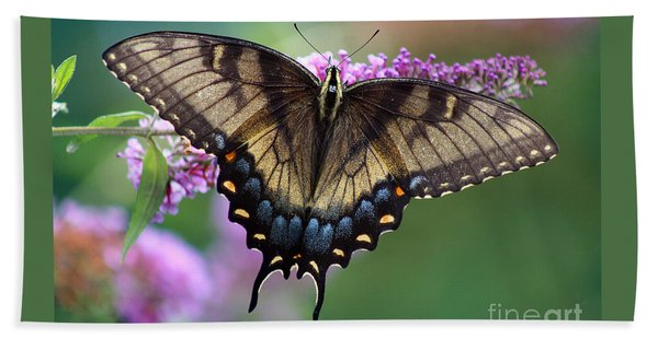 Eastern Tiger Swallowtail Butterfly On Butterfly Bush Hand Towel