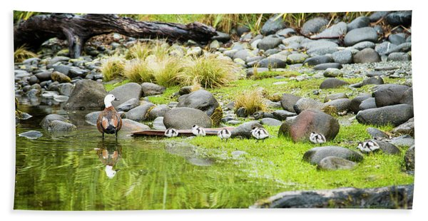 A Paradise Shelduck And Its Ducklings Bath Towel