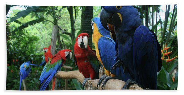 Aloha Kaua Aloha Mai No Aloha Aku Beautiful Macaw Hand Towel