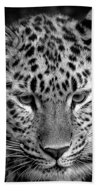 Amur Leopard In Black And White Hand Towel