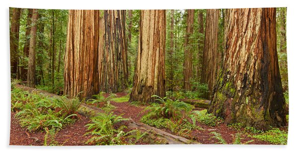 Ancient Forest - The Massive Giant Redwoods Sequoia Sempervirens In Redwood National Park. Bath Towel