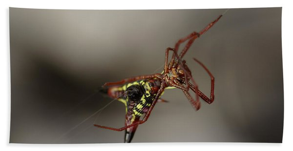 Arrow-shaped Micrathena Spider Starting A Web Hand Towel