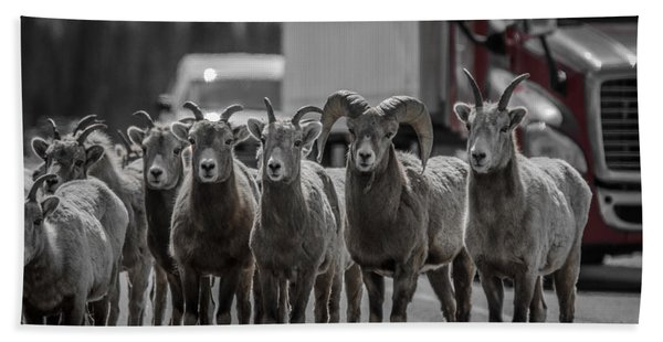 Big Horn Sheep Road Block Hand Towel