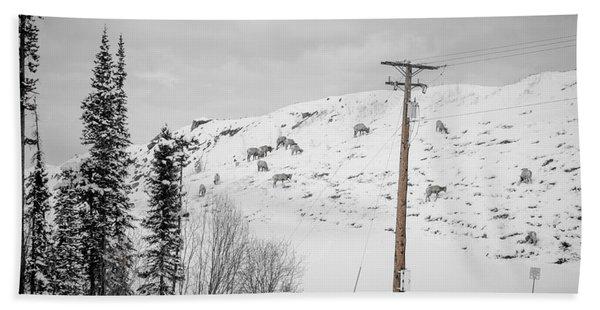 Big Horn Sheep Hinton Hillside Hand Towel