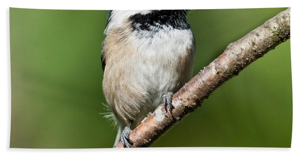Black Capped Chickadee Hand Towel
