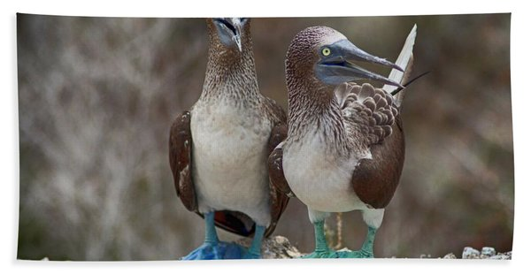 Blue-footed Boobies Hand Towel
