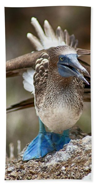 Blue-footed Booby Hand Towel