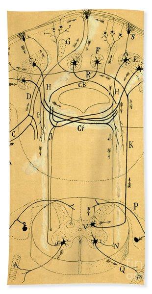 Brain Vestibular Sensor Connections By Cajal 1899 Bath Towel