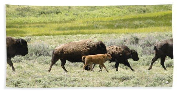 Buffalo Family Hand Towel