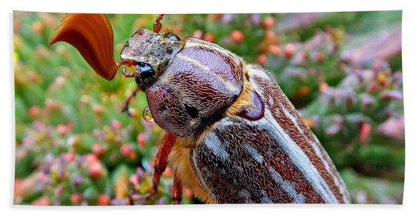Chafer Beetle On Medusa Succulent 2 Hand Towel
