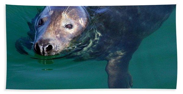 Chatham Harbor Seal Hand Towel