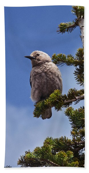 Clark's Nutcracker In A Fir Tree Hand Towel