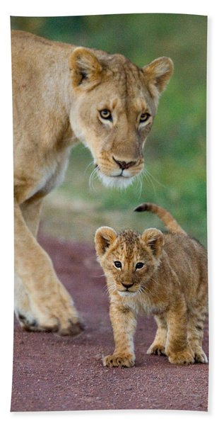 Close-up Of A Lioness And Her Cub Hand Towel