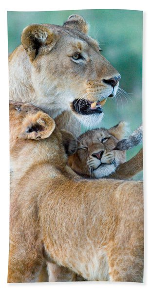 Close-up Of A Lioness And Her Two Cubs Hand Towel