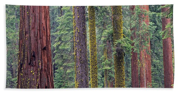 Coast Redwoods In Mariposa Grove Bath Towel
