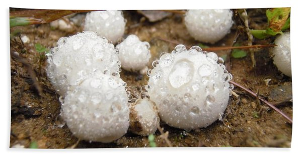 Common Puffball Dewdrop Harvest Hand Towel