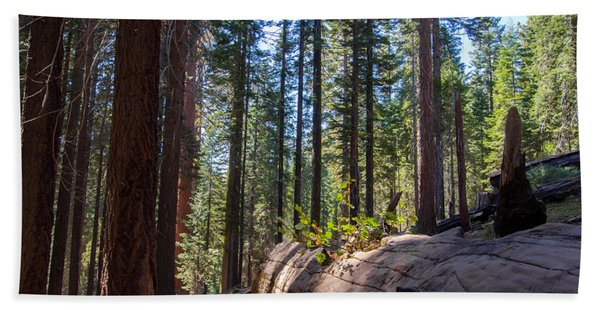 Coniferous Forest Bath Towel
