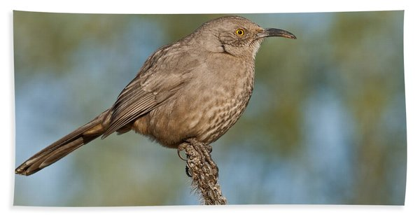Curve-billed Thrasher Hand Towel