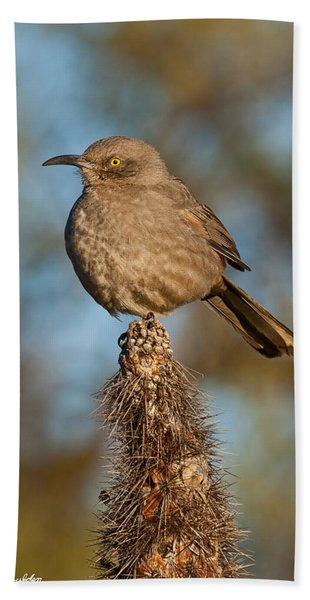 Curve-billed Thrasher On A Cactus Hand Towel