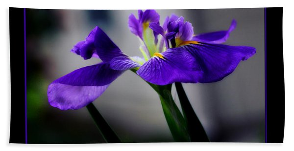 Elegant Iris With Black Border Bath Towel