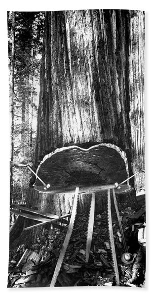 Falling A Giant Sequoia C. 1890 Bath Towel
