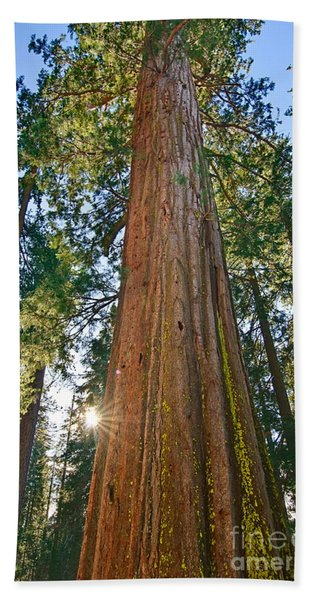 Giant Sequoia Trees Of Tuolumne Grove In Yosemite National Park. Bath Towel