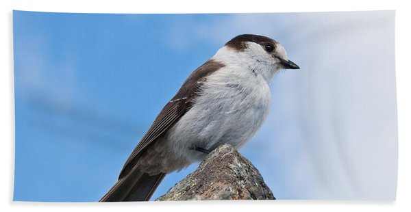 Gray Jay With Blue Sky Background Hand Towel