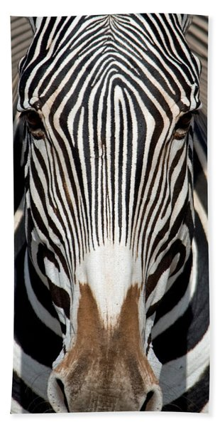 Greveys Zebra, Samburu National Hand Towel