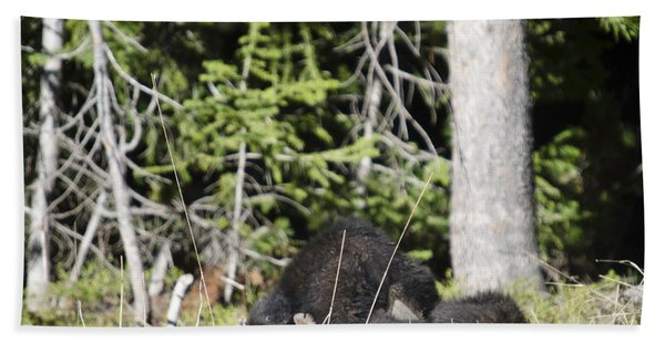 Grizzly Cubs Playing Hand Towel