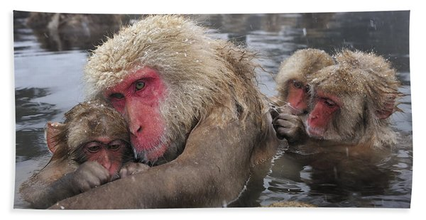 Japanese Macaque Grooming Mother Bath Towel