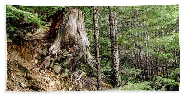 Just Hanging On Old Growth Forest Stump Bath Towel