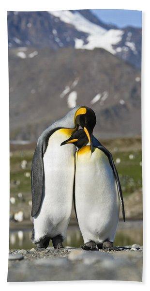 King Penguins Courting St Andrews Bay Bath Towel