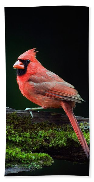 Male Northern Cardinal Cardinalis Hand Towel