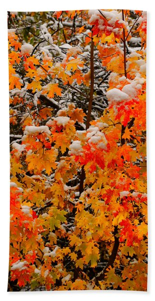 Bath Towel featuring the photograph Maple Glow Limited Edition by Greg Norrell