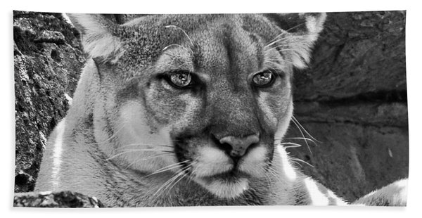Mountain Lion Bergen County Zoo Hand Towel