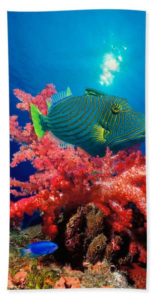 Orange-lined Triggerfish Balistapus Hand Towel