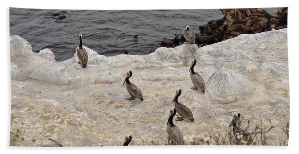 Pelicans Seals N Daisies  Hand Towel